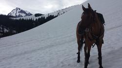 Takoda in a snow field