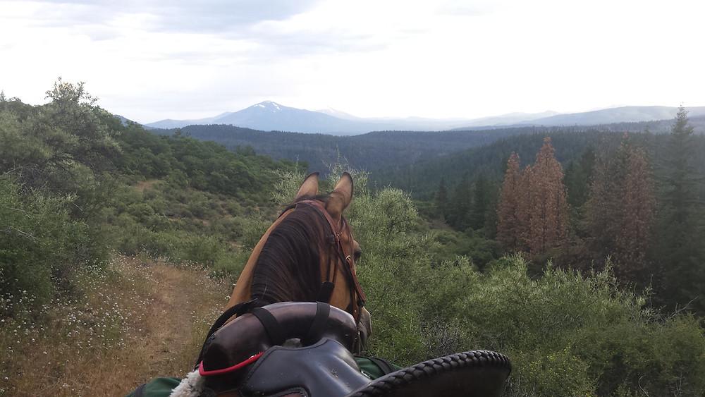 Shyla surveying the trail ahead