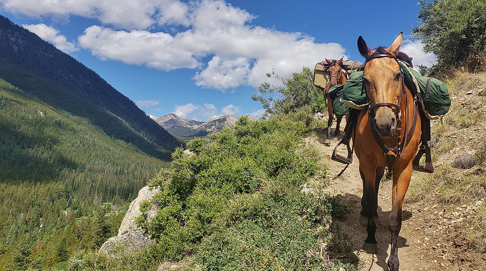 Shyla and Takoda following me down the trail