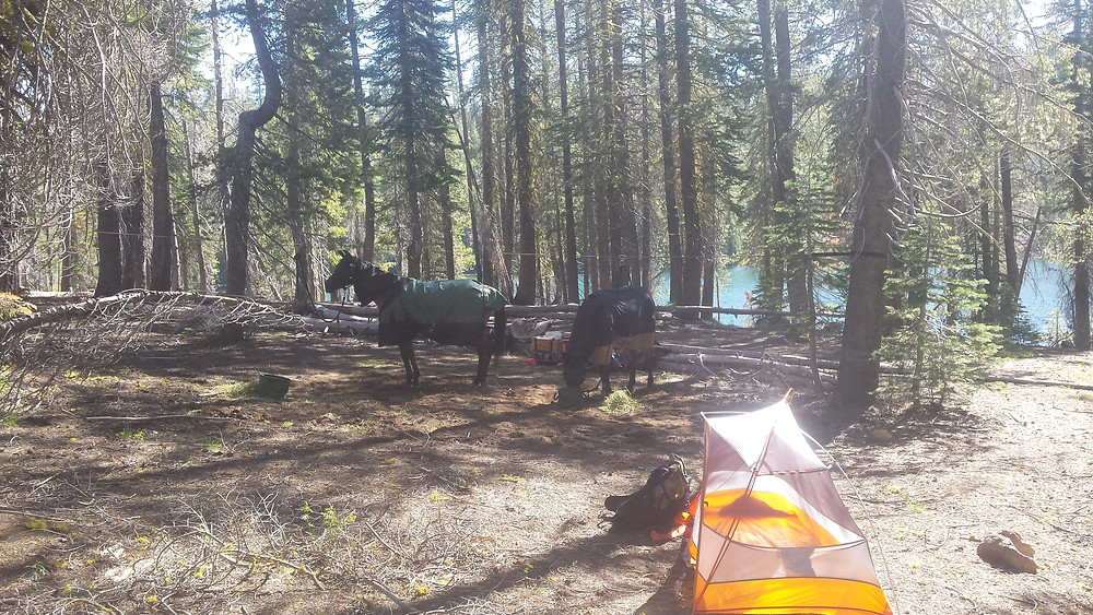 Our campsite (complete with mosquitoes!)
