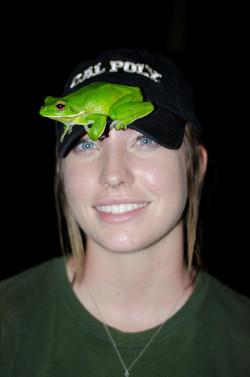 White Lipped Tree Frog in Australia