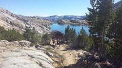 Takoda in the Sierra