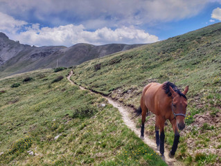 Spring Creek Pass Corrals
