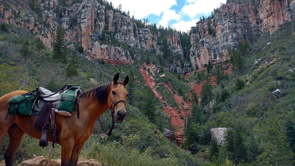 Looking back up at the north rim behind Shyla