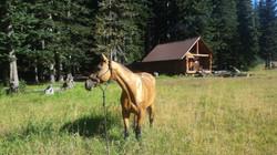 Shyla in the meadow