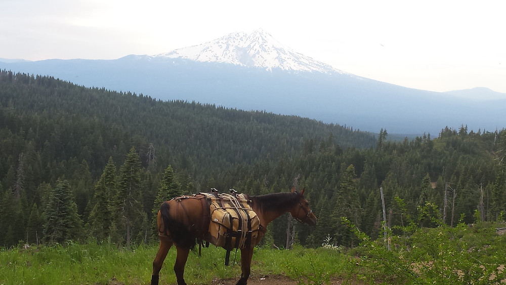 Takoda with Mt. Shasta in the backgound