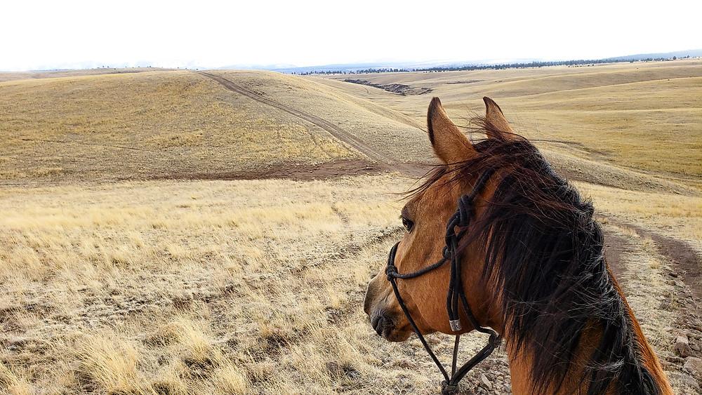 Lots of open grassland