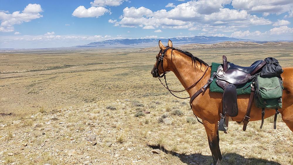Wyoming's Great Divide Basin