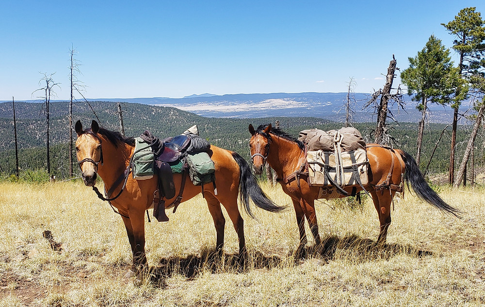 Shyla and Takoda in the Gila National Forest