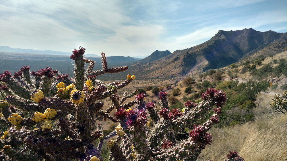 Coronado National Park