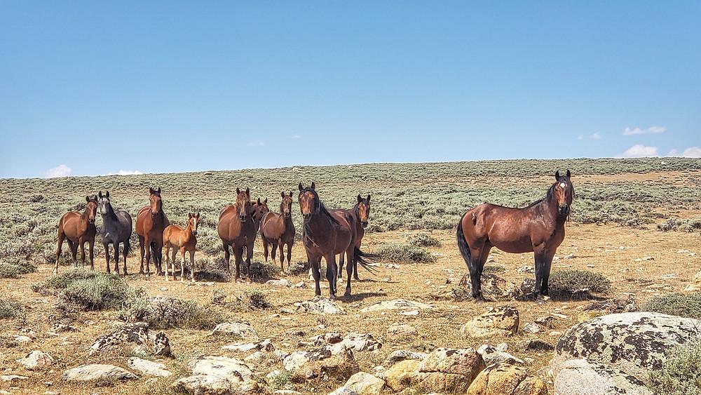 Another herd