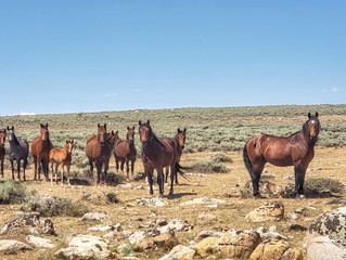 Where Wild Horses Roam