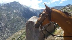 descending from Mt. Jacinto
