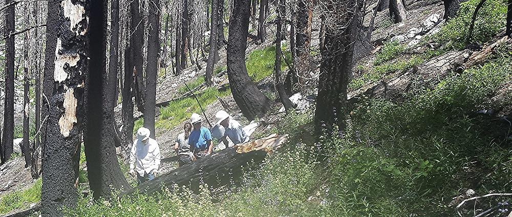 Rhonda Zinkel and crew clearing trees