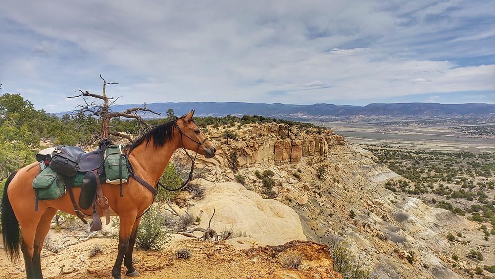 At the edge of the mesa