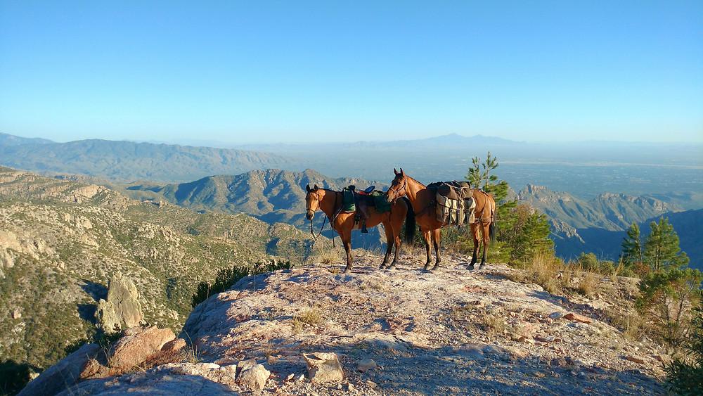 overlooking Sabino Canyon