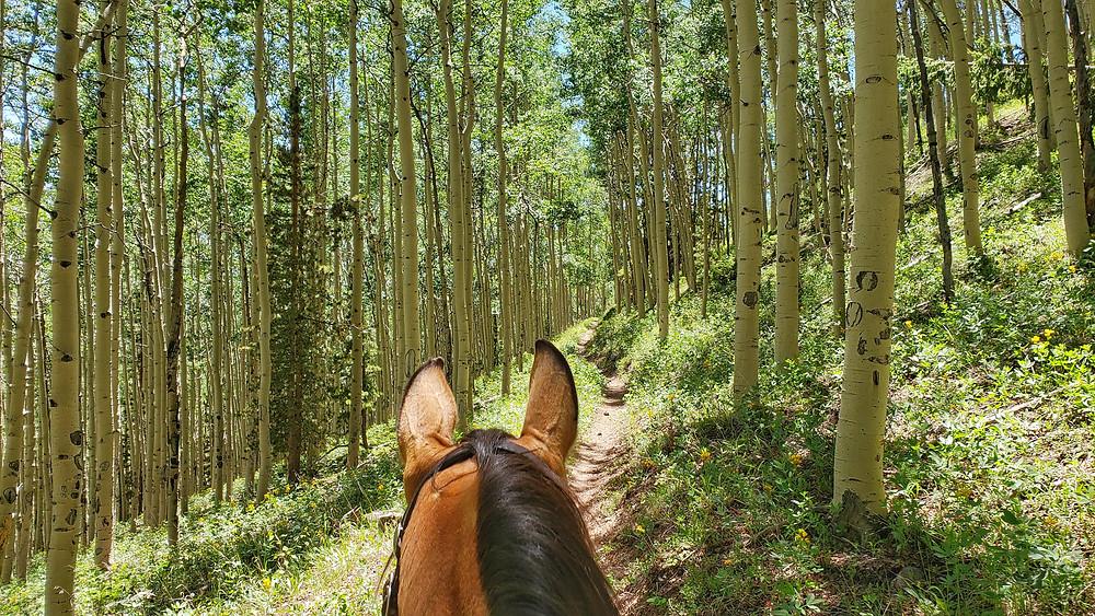 riding through Colorado aspens