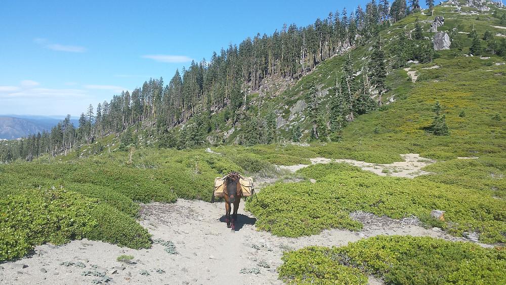 Takoda following down the hill to Belden