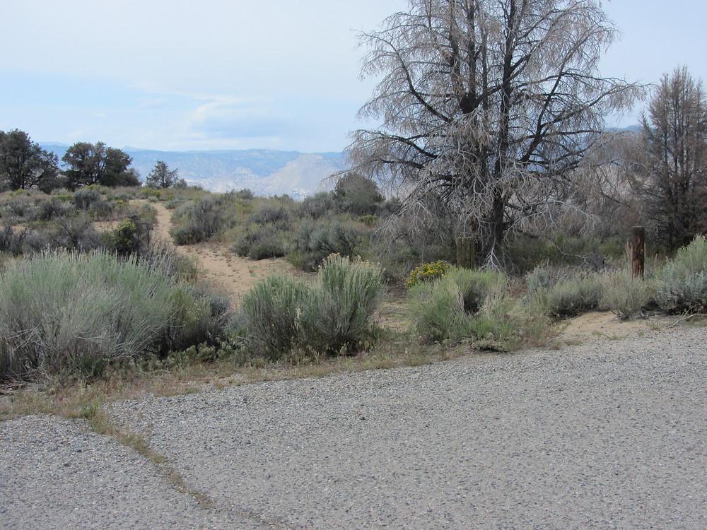 Trail toward the water trough