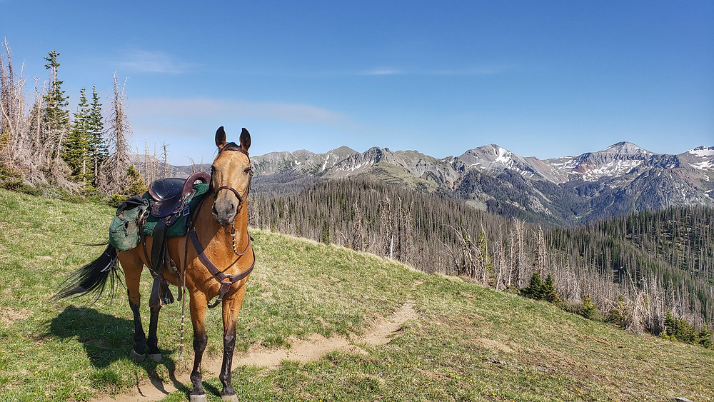 Shyla riding out of Wolf Creek Pass