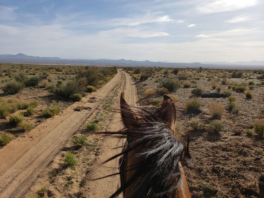 The trail north of Lordsburg, NM