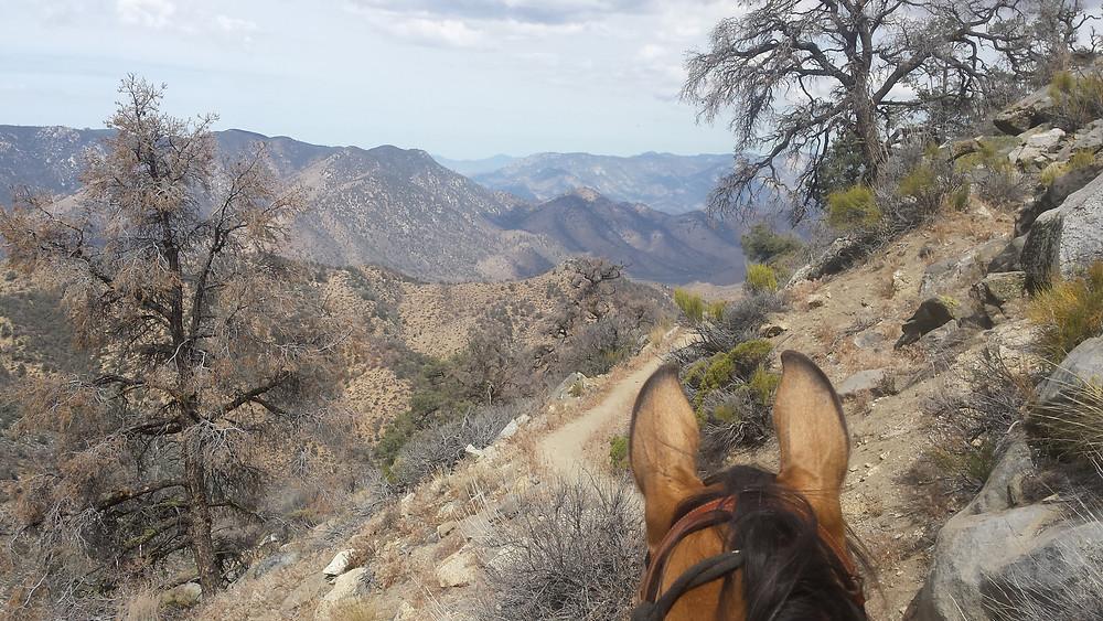 climbing out of Walker Pass