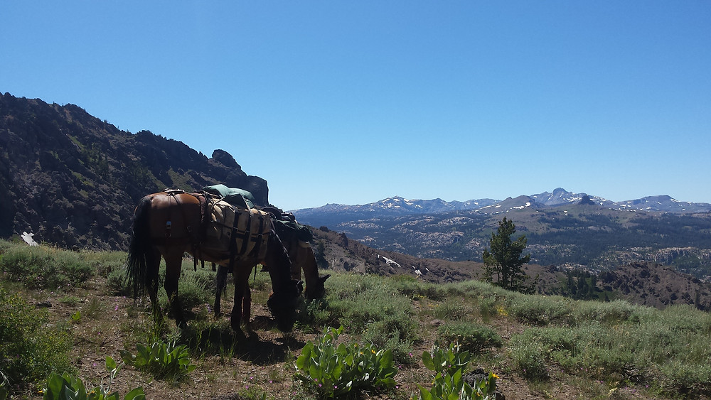 heading north from Ebbetts Pass