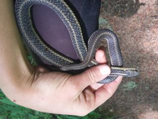 First Oregon snake