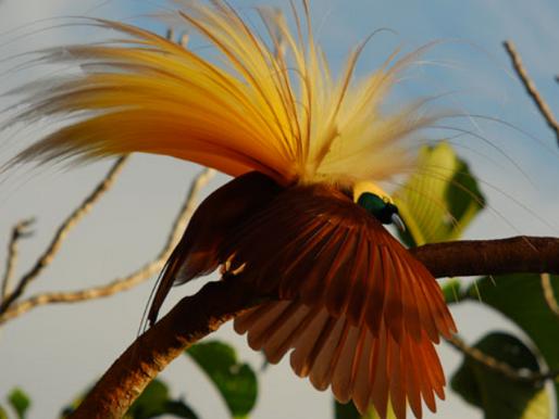 Vogeltelling: hebt u de onomatopee al gezien?