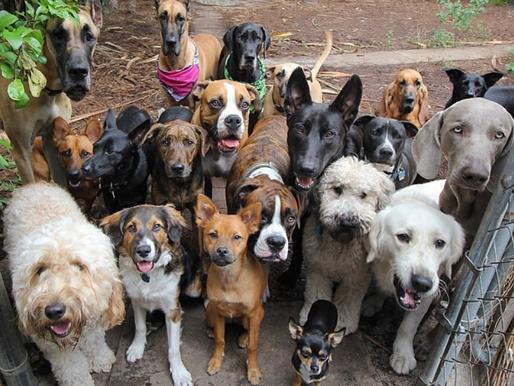 Hond en belasting