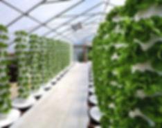 greenhouse inside 3.jpg