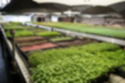 greenhouse inside 2.jpg