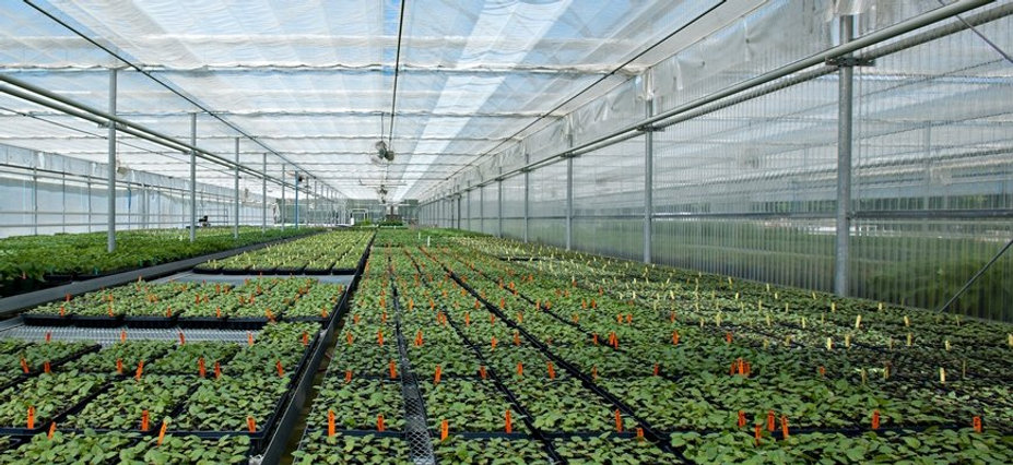 greenhouse seedlings.jpg