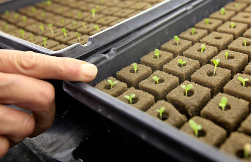 seedling trays.jpg