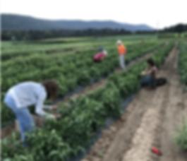 farm crops.png