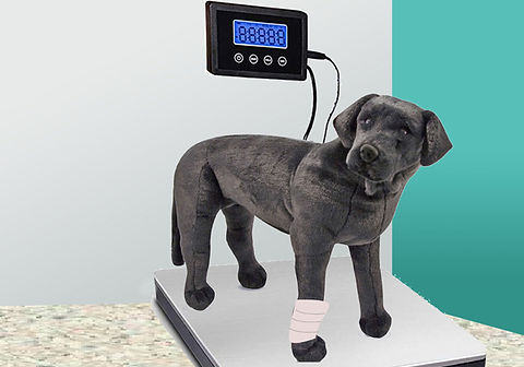 puppy_on_scale.jpg