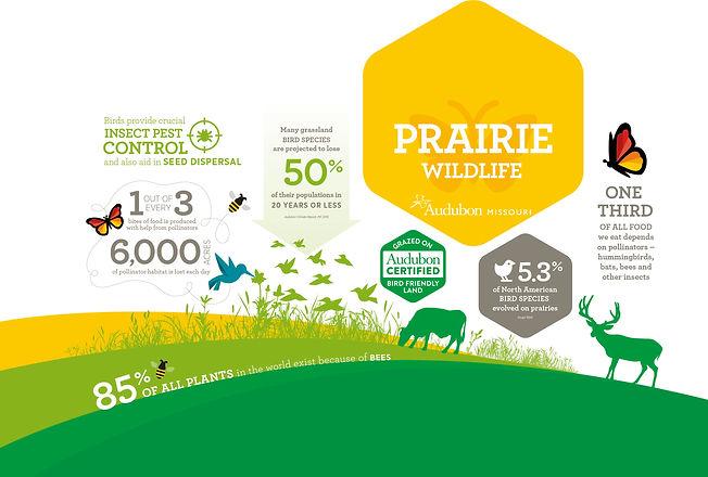 MO_57135_1_Info_Graphic_Prairie-Wildlife_a4.jpg