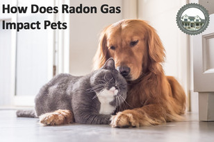 How Does Radon Gas Impact Pets?