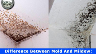 Difference Between Mold And Mildew: The Real Answer