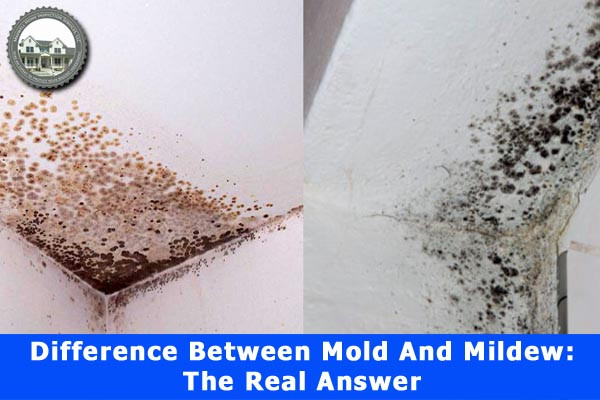 Difference Between Mold And Mildew The Real Answer