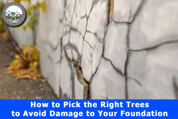 How to Pick the Right Trees to Avoid Damage to Your Foundation