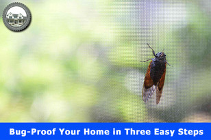 Bug-Proof Your Home in Three Easy Steps.