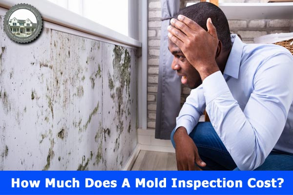 How Much Does A Mold Inspection Cost