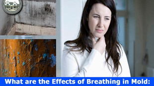 What are the Effects of Breathing in Mold: An Introduction