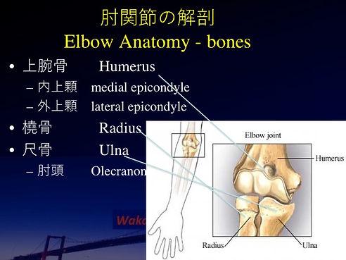 Elbow anatomy1 .jpg