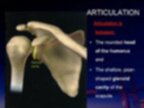肩の骨 .jpg