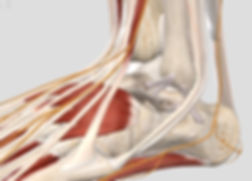 ankle%20lateral_edited.jpg