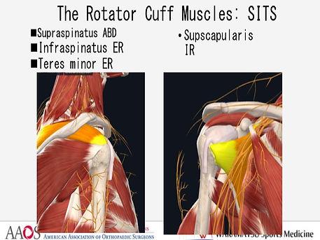 rotator cuff .jpg
