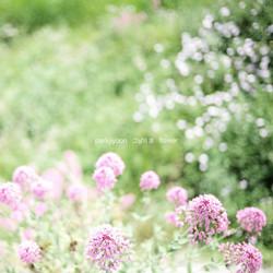 parkjiyoon_flower