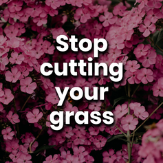Cutting your grass short kills wildflowers and exposes an area where insects would normally thrive. Doing this means less work, and more impact!